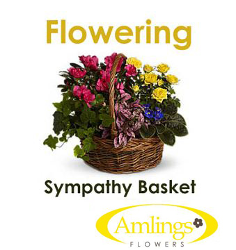 Flowering Sympathy Basket  in Chicagoland IL, Amling's Flowerland
