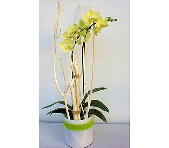 Modern Fresh Orchid in Victoria BC, Fine Floral Designs