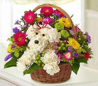 Flower Doggy Basket in Fairfax VA, Greensleeves Florist