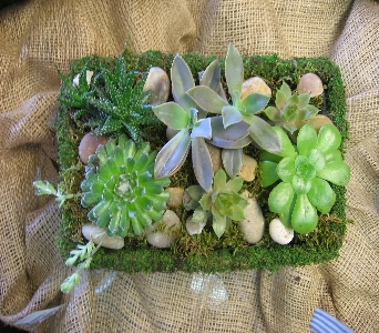 Moss Garden Succulents in Columbus OH, OSUFLOWERS .COM
