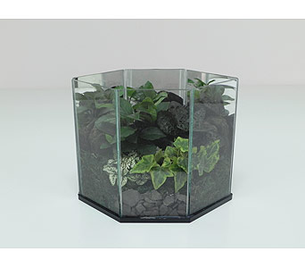 Green Trance Terrarium in Indianapolis IN, Gillespie Florists