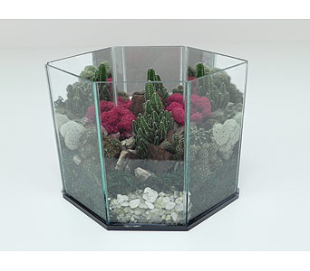 Mesa Sunrise Cactus Terrarium in Indianapolis IN, Gillespie Florists
