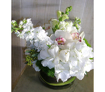 White Thunder in Dallas TX, Petals & Stems Florist