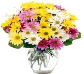 Assorted Daisy Vase