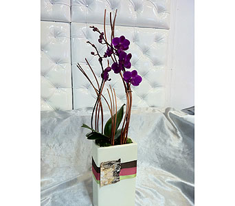 Mini-Purple-Orchid-5 in Santa Monica CA, Santa Monica Florist