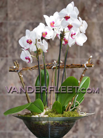 Phaleanopsis ''Butterfly'' Orchid Planter in Etobicoke ON, VANDERFLEET Flowers