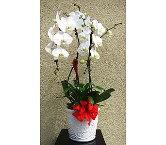 Double-Phalaenopsis-with-tropicals in San Diego CA, The Floral Gallery