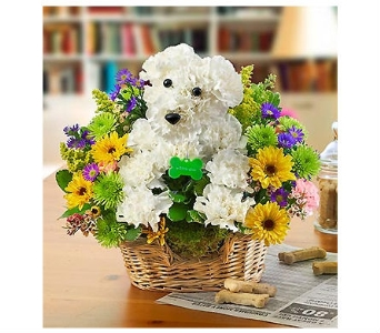Man's Best Friend in Bradenton FL, Ms. Scarlett's Flowers & Gifts