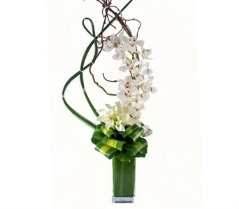 Artisan Orchid in Bradenton FL, Ms. Scarlett's Flowers & Gifts