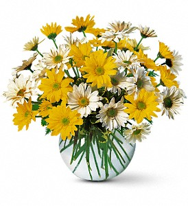 Dashing Daisies in Norwich NY, Pires Flower Basket, Inc.
