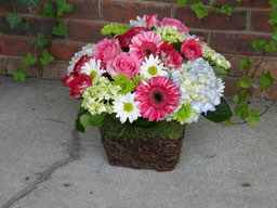 Grapevine & Moss Basket with Fresh Cut Flowers in Birmingham AL, Continental Florist