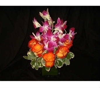 Circus Bed of Orchids in Dallas TX, Z's Florist