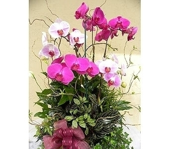 Planter with Orchids, Lillies   in Sunnyvale CA, Flowers By Sophia