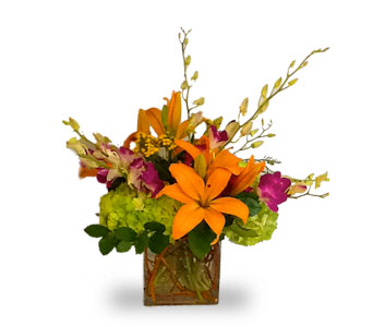 Seasonal Sizzle in Houston TX, River Oaks Flower House, Inc.