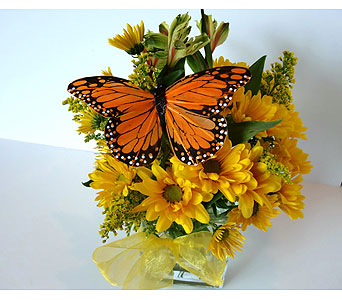 Sunshine Butterfly in Nashville TN, Flowers By Louis Hody