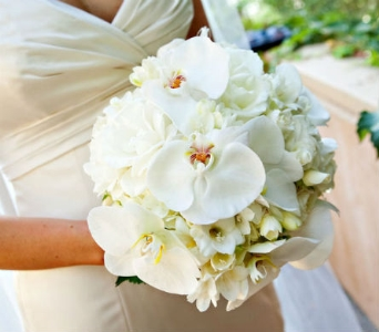 White Orchid Bride in Knoxville TN, The Flower Pot