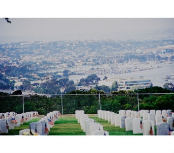 FORT ROSECRANS in San Diego CA, Flowers Of Point Loma