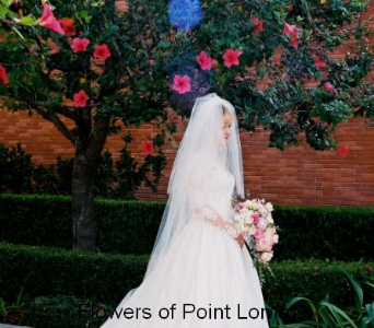 Ann in San Diego CA, Flowers Of Point Loma