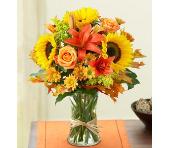 Fields of Europe� for Fall  in Concord CA, Jory's Flowers
