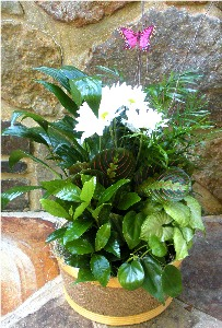 Basket Garden 10 Inch in Kennett Square PA, Barber's Florist Of Kennett Square