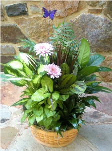 Basket Garden 12 Inch in Kennett Square PA, Barber's Florist Of Kennett Square