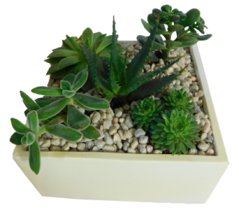Succulent Garden in Little Rock AR, Tipton & Hurst, Inc.