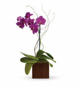 Teleflora's Bamboo Elegance in Mitchell SD, Nepstads Flowers And Gifts