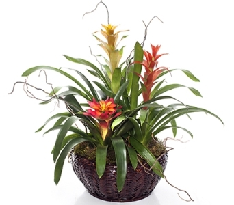 Bromeliad Garden Basket in Little Rock AR, Tipton & Hurst, Inc.
