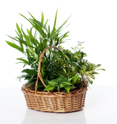Green and Growing Basket in Little Rock AR, Tipton & Hurst, Inc.