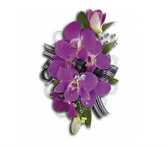 Purple Dendrobium Orchids in Warren MI, Downing's Flowers & Gifts Inc.