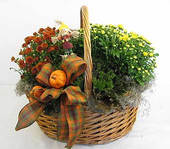 Festive Mum Basket in Lower Gwynedd PA, Valleygreen Flowers and Gifts