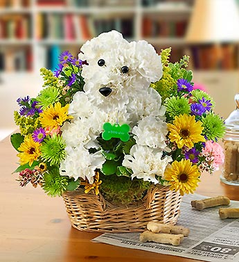 Man's Best Friend in Chambersburg PA, All Occasion Florist