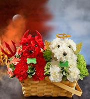 Devil Dog, Angel Dog in Yelm WA, Yelm Floral
