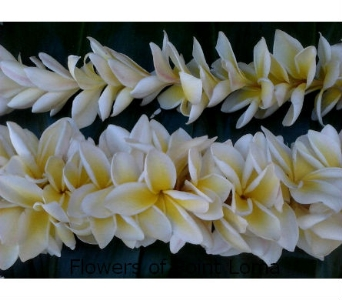 Plumeria Leis in San Diego CA, Flowers Of Point Loma
