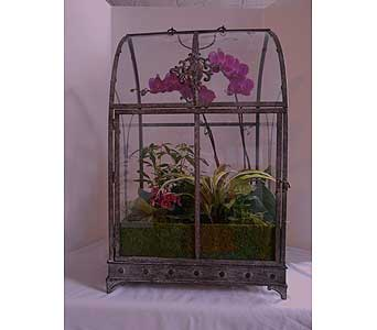 Large Terarium with Orchid in Crafton PA, Sisters Floral Designs
