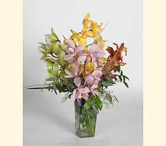 Cymbidium Orchids in Southampton PA, Domenic Graziano Flowers