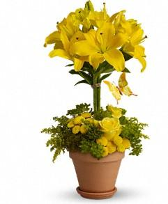Yellow Fellow in Jacksonville FL, Jacksonville Florist Inc