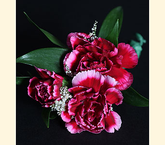 Boutonniere 3 Mini Carnations in Southampton PA, Domenic Graziano Flowers