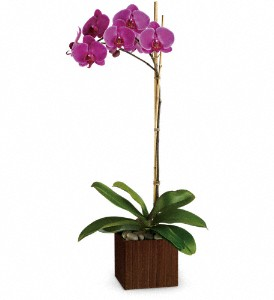 Teleflora's Sublime Orchid in Lockport NY, Gould's Flowers, Inc.