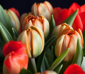 3 Month Package - SAVE 33% in La Jolla CA, Adelaide's Florists and Decorators