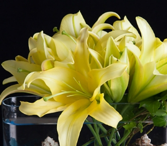 12 Month Package - SAVE 38% in La Jolla CA, Adelaide's Florists and Decorators