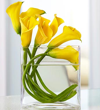 Calla Lilies vased in Mooresville NC, All Occasions Florist & Gifts<br>704.799.0474