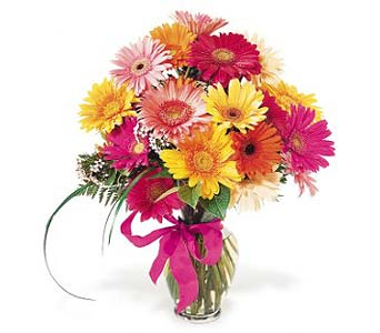 Gerbera Daisies in Wichita KS, Tillie's Flower Shop