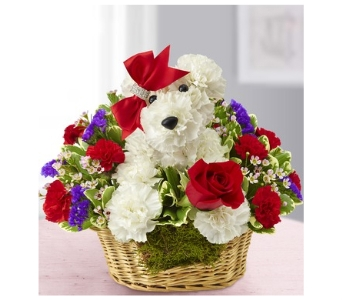 Love Pup in Bradenton FL, Ms. Scarlett's Flowers & Gifts