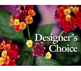 Designer's Choice in Silvermill Plaza FL, Buds, Blooms & Beyond