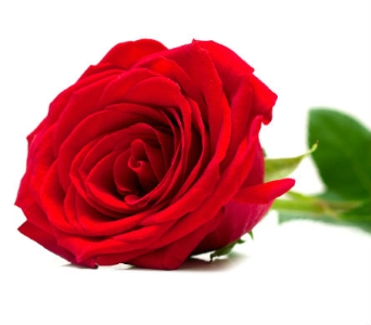 1 Doz medium stem red roses in box in Mississauga ON, Streetsville Florist