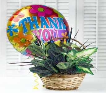 Thank You Plant Garden in Princeton, Plainsboro, & Trenton NJ, Monday Morning Flower and Balloon Co.