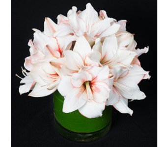 Candy Striper in New York NY, Starbright Floral Design