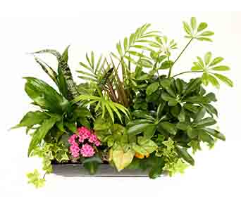 Deluxe Metal Tropical Garden Planter in Simcoe ON, Ryerse's Flowers