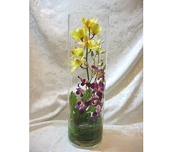 Mixed orchids arrangement in Lake Forest CA, Cheers Floral Creations